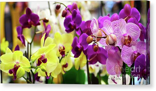 Canvas Print featuring the photograph Decorative Orchids Still Life C82418 by Mas Art Studio