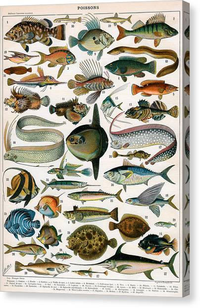 Angler Art Canvas Print - Decorative Print Of Poissons By Demoulin by American School