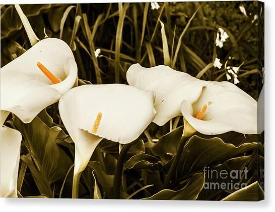 Calla Lily Canvas Print - Decorative Spring Garden by Jorgo Photography - Wall Art Gallery