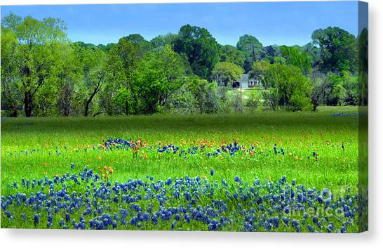 Decorative Texas Homestead Bluebonnets Meadow Mixed Media Photo H32517 Canvas Print