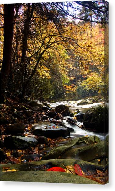 Deep Creek Mountain Stream Canvas Print