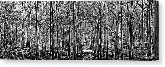Black Forest Canvas Print - Deep Forest Bw by Az Jackson