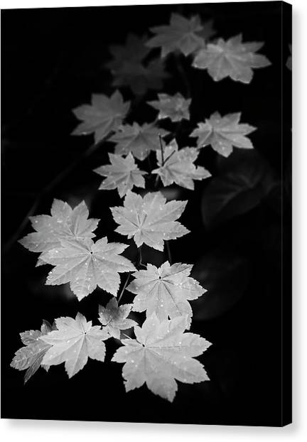 Deep Forest Maple Canvas Print