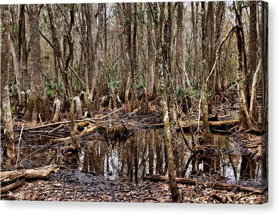 Starkey Canvas Print - Deep In A Florida Wetland 2 by John Trommer