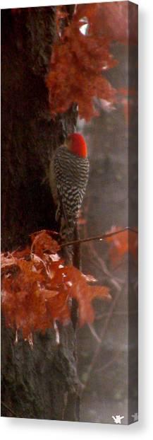 Deep In The Forest Woodpecker Canvas Print by Debra     Vatalaro