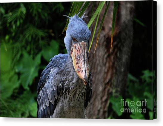 Deep In Thought Canvas Print