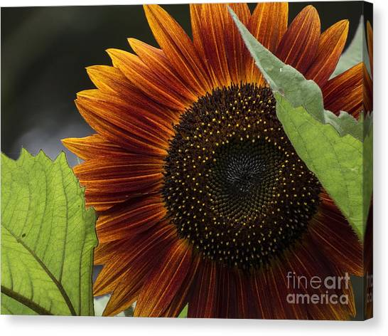 Deep Orange Canvas Print
