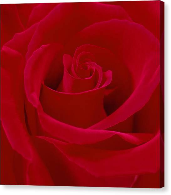Red Roses Canvas Print - Deep Red Rose by Mike McGlothlen