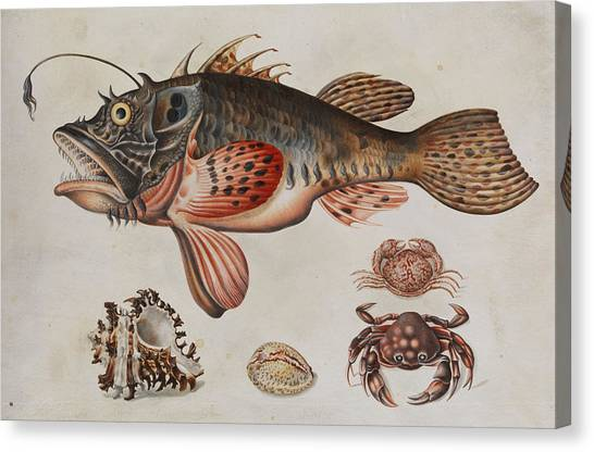 Dor Canvas Print - Deep-sea Fish, Crabs And Sea Snails by Maria Sibylla Merian