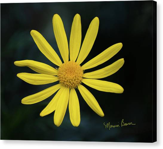 Deep Yellow Flower Canvas Print