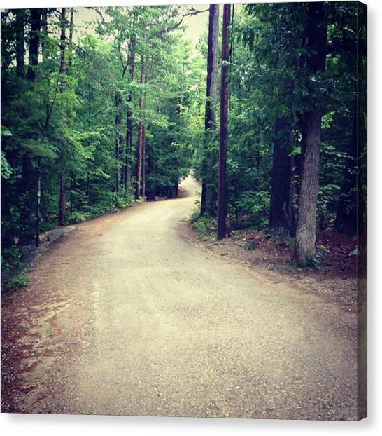 Forest Paths Canvas Print - Deephaven Road  by Heather Classen