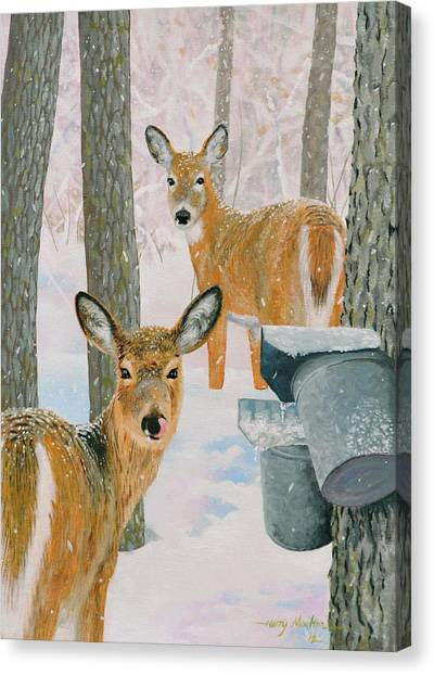 Deer And Sap Buckets Canvas Print