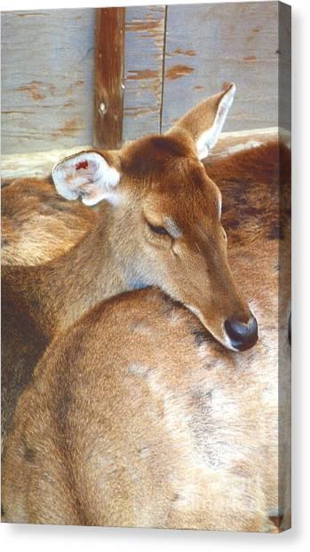 Deer Canvas Print by Andrea Simon