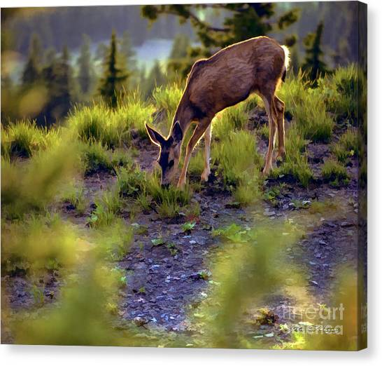 Deer At Crater Lake, Oregon Canvas Print