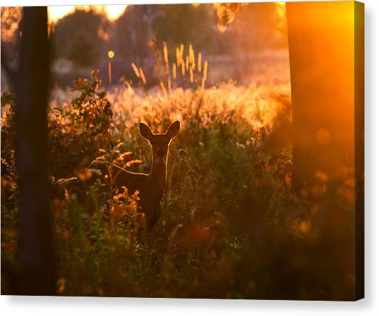 Fall Canvas Print - Deer At Ojibway Park by Cale Best