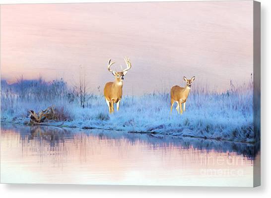 White-tailed Deer Canvas Print - Deer At Winter Pond by Laura D Young