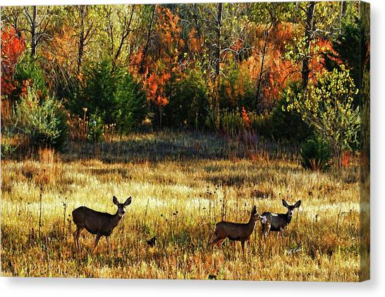 Deer Autumn Canvas Print