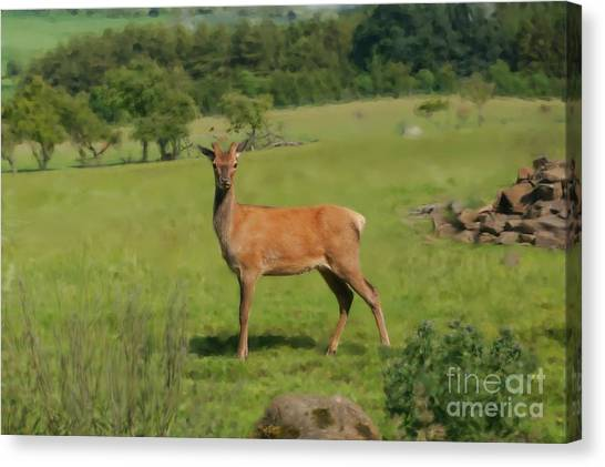 Deer Calf. Canvas Print