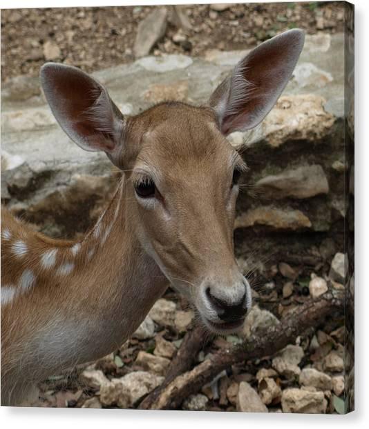 Deer Canvas Print by Dennis Stein