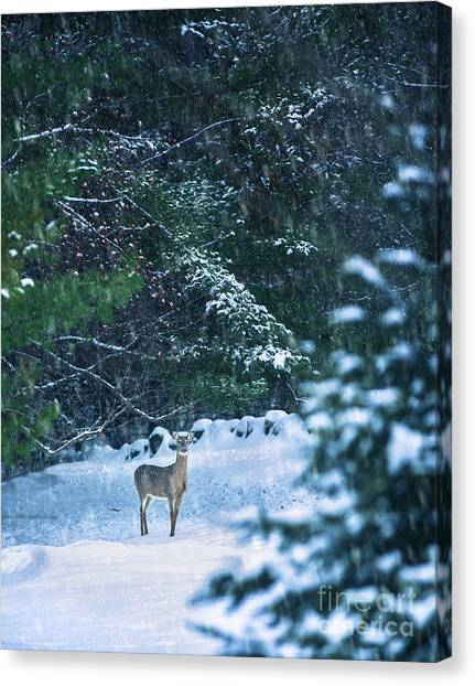 White-tailed Deer Canvas Print - Deer In A Snowy Glade by Diane Diederich