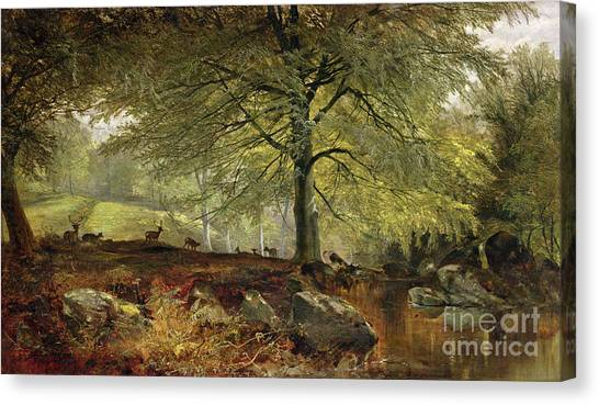 Stag Canvas Print - Deer In A Wood by Joseph Adam