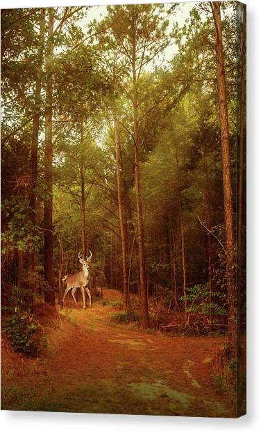 Canvas Print featuring the photograph Deer In Morning Light by Barry Jones