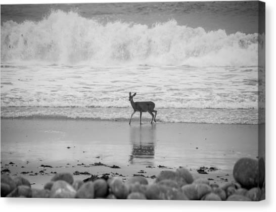 Deer In Ocean Black And White Canvas Print