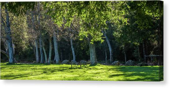 Deer In The Afternoon Sun Canvas Print