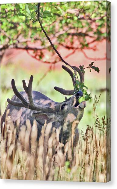 Deer In The Orchard Canvas Print