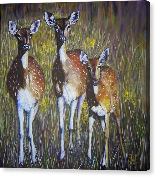 Deer On Guard Canvas Print