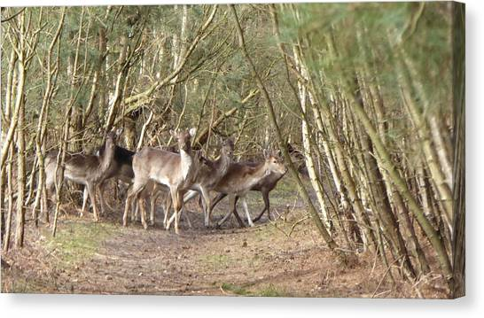 Deer Walking Across Forest Path Canvas Print by Richard Griffin