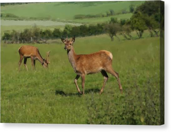 Deers On A Hill Pasture. Canvas Print