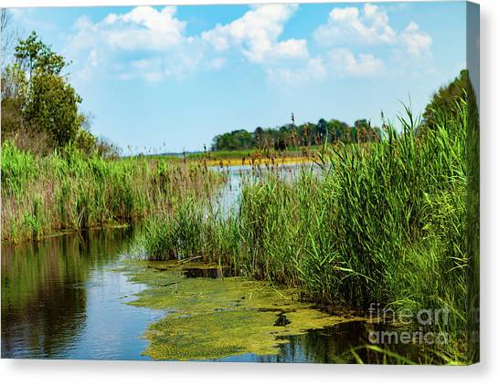Delaware Marsh Canvas Print