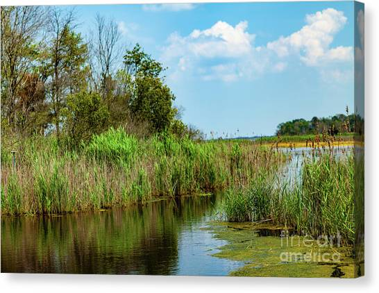 Delaware Wetlands Canvas Print