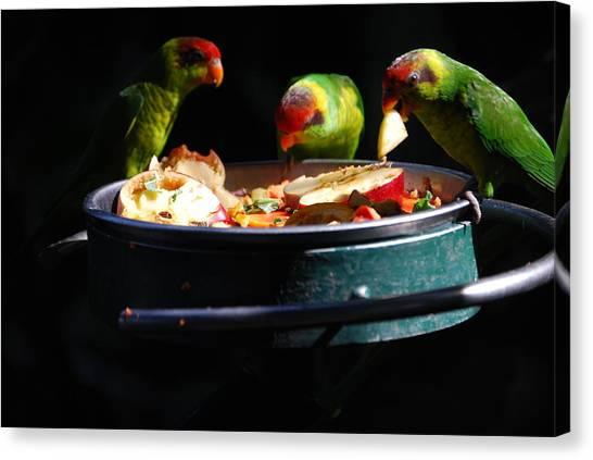 Delicacies Canvas Print by Robert Boyette