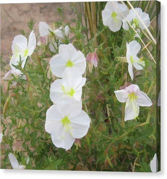 Delicate Desert Bloom - Death Valley Canvas Print