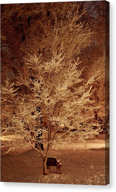 Delicate Dusting Canvas Print by Charles Shedd