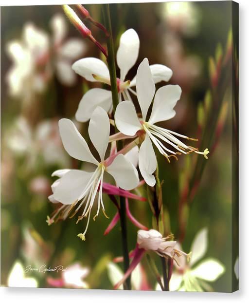 Delicate Gaura Flowers Canvas Print