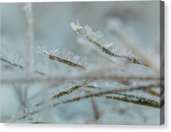 Delicate Morning Frost  Canvas Print