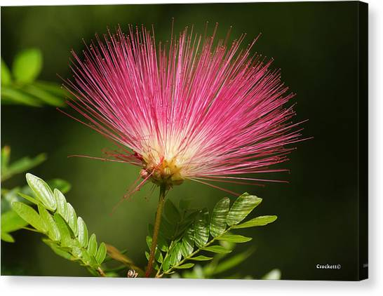 Delicate Pink Bloom Canvas Print