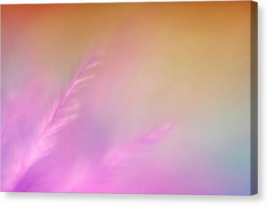 Indoor Still Life Canvas Print - Delicate Pink Feather by Scott Norris