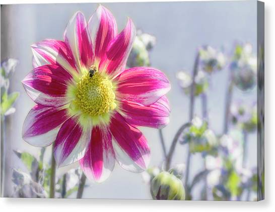 Canvas Print featuring the photograph Delicious Dahlia by Belinda Greb