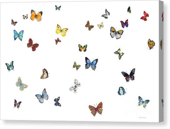 Butterflies Canvas Print - Delphine by Amy Kirkpatrick