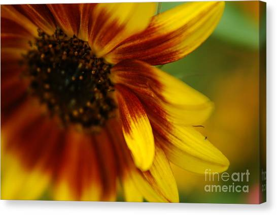Demure Canvas Print by Michelle Hastings