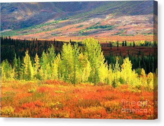 Denali Autumn Tundra Canvas Print