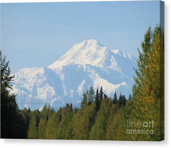 Denali Framed By Trees Canvas Print