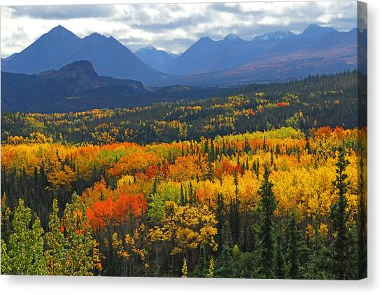 Denali Canvas Print - Denali National Park Greeting by Alan Lenk