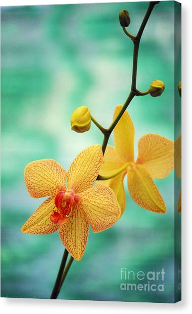 Flower Canvas Print - Dendrobium by Allan Seiden - Printscapes