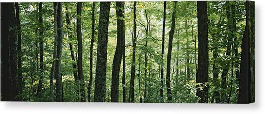 Pisgah National Forest Canvas Print - Dense Temperate Rain Forest by Rich Reid