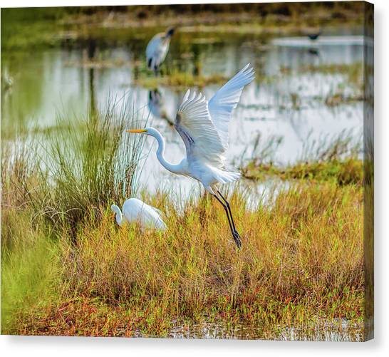 Wetlands Canvas Print - Departing by John M Bailey